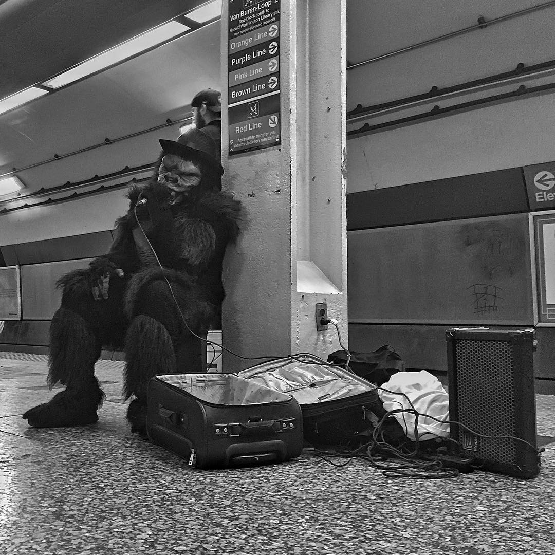 Gorillas of the CTA